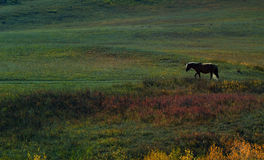 Lonely Wild horse Royalty Free Stock Photo