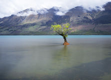 A lonely willow tree with clear water and beautiful mountain background. Stock Photo