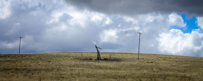 Lonely wind swept tree and crow in a desolate Australian landscape Royalty Free Stock Photography