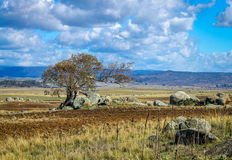 Lonely wind swept tree in a Rocky desolate Australian landscape Stock Photo