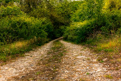 A lonely winding road on the hills of Tuscany. In Spring royalty free stock images