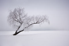 Lonely winter tree Stock Images