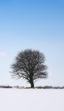 Lonely winter tree Stock Photos