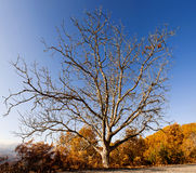 Lonely winter tree Stock Photo