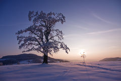 Lonely winter tree. Lonely and unique winter tree in a snow hill taken during sunset royalty free stock image