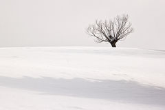 Lonely winter tree Royalty Free Stock Images