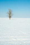 Lonely winter tree Royalty Free Stock Photos