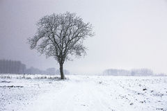 Lonely winter tree. On a beautiful day in the winter stock image