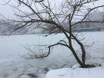 Lonely winter tree bent into the frozen river. Bare tree with branches into frozen river Stock Photos