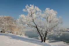 Lonely winter tree covered with frost. Stock Images