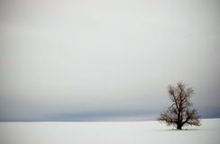 Lonely Winter Tree In The Snow Vignette. Single tree in snow field during winter Royalty Free Stock Images