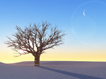 Lonely winter tree at sunset Royalty Free Stock Images