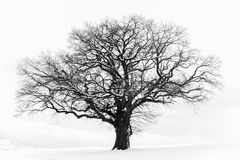 The Lonely Winter Tree Stock Photos