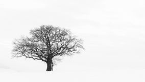 The Lonely Winter Tree Royalty Free Stock Image