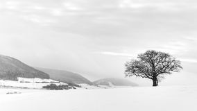 The Lonely Winter Tree Stock Image