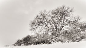 Lonely Winter Tree Stock Photography