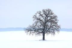 Lonely winter tree on white snow stock photos