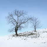 Lonely winter trees Royalty Free Stock Photo