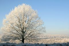 Lonely Wintry Tree Royalty Free Stock Photos