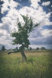 Lonely withered crooked tree under a cloudy sky stock photography