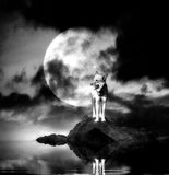 Lonely wolf with full moon. Reflecting in a lake royalty free stock images