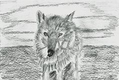 Lonely Wolf - Lupus - Pencil Drawing. This is a hand drawn pencil drawing. The drawing shows a lonely wolf. He looks straight ahead. In the background is the sky Royalty Free Stock Images