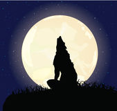The lonely wolf sits on a rock Royalty Free Stock Photo