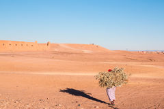 Lonely woman carrying a load of wood in desert Morocco 11 january 2017 Royalty Free Stock Image