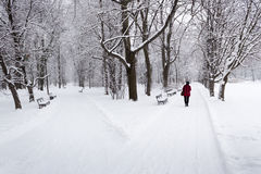 Lonely woman walking in a park during snowfall Stock Photo
