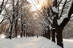 Lonely woman walking in winter time Stock Images