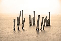Lonely Wood. Wood in Sunny Bay, Hong Kong Royalty Free Stock Photography