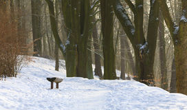 Lonely wooden bench covered by snow in park Royalty Free Stock Image