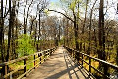 Lonely wooden bridge in the forest. On a sunny spring day Stock Photo