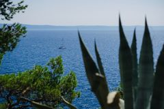 А lonely yacht seen from behind vegetation on a Croatian island Stock Photo