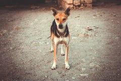 Lonely yard dog Stock Photos