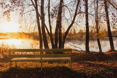 A lonely yellow bench stands near the river in the rays of the r royalty free stock photos