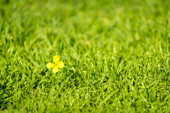 Lonely yellow flower Royalty Free Stock Photo