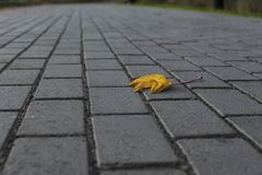 Lonely yellow leaf on a gray sidewalk stock photography