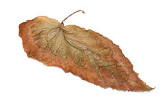 Lonely yellow leaf Royalty Free Stock Image