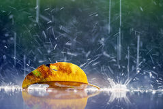 Lonely yellow leaf raindrop lonely concept. Close up lonely yellow leaf raindrop lonely concept Royalty Free Stock Photo