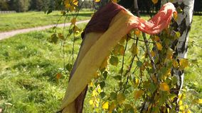 Lonely yellow scarf blowing in wind on the tree. Autumn background slow motion stock video footage