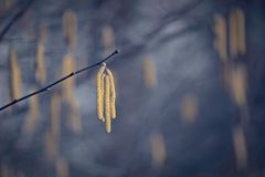 Free Lonely Yellow Seed On Winter Branch In Bleak Ambience Stock Photography - 116655772