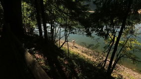 Lonely young man fishing in the high mountain blue lake surrounded by old green carpathian mountain forest stock footage