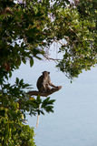 Lonely young monkey. A nice day of young monkey Stock Photo