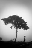 Loner with umbrella. A lonely guy standing near a tree stock photography