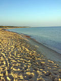 Lonesome beach of the Baltic Sea Royalty Free Stock Photos