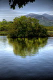 Lonesome Bush In Co Kerry Stock Photo