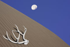 Lonesome Desert. Remnants of deer antler, moon and desert sand: a modern art composition Royalty Free Stock Image