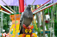 Lonesome Dove in the amusement park on swing Royalty Free Stock Photo