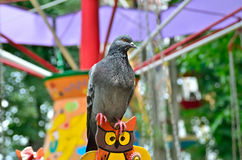 Lonesome Dove in the amusement park on swing Stock Photo